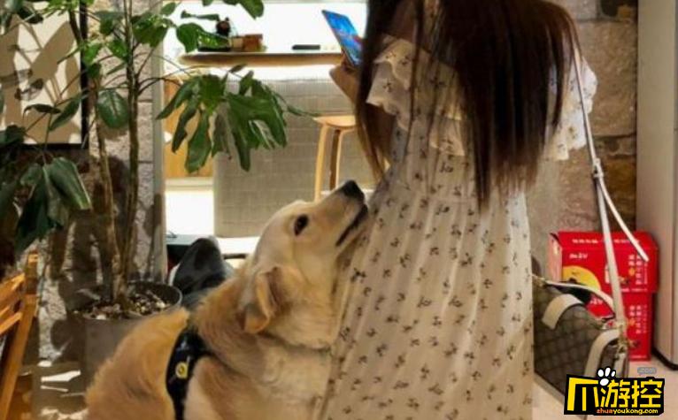 如何正确的当一个舔狗,好的舔狗所具备的条件
