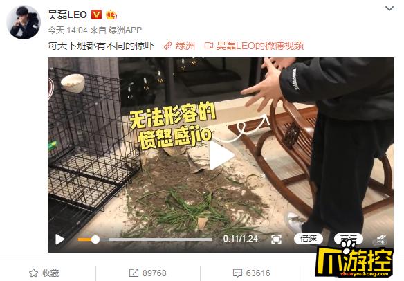 吴磊的盆栽被狗撞翻