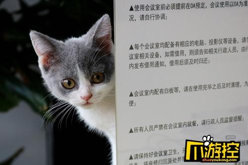 听说《猫狩纪》来了个神秘的游戏监工?