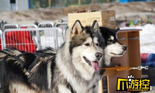 杭州女子拼车拼到两条大狗 一路吓得瑟瑟发抖