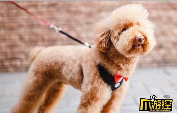 杭州规定遛狗时间 不栓狗绳或将没收狗