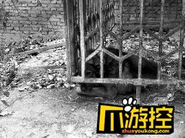 七旬老太误入工地 惨遭4只恶犬撕咬致重伤