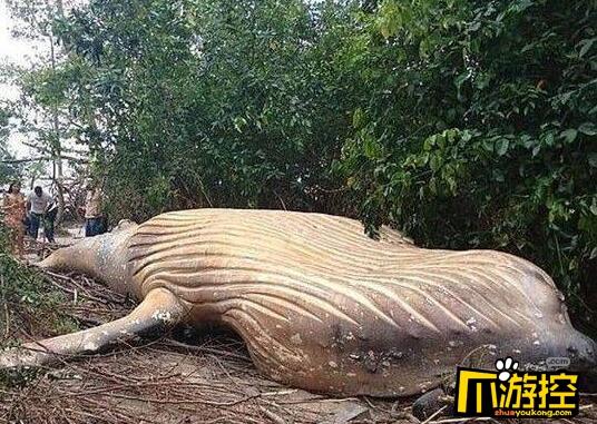惊呆!巴西惊现11米座头鲸尸体 重达10吨
