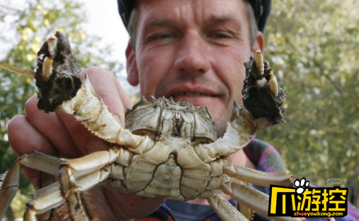 比利时大闸蟹泛滥已抓获71.5万只