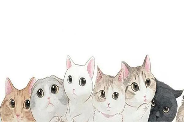 最近很火的养猫游戏大全